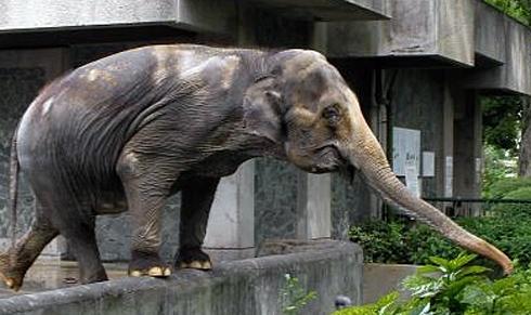 hanako elefante universidad _ stepienybarno