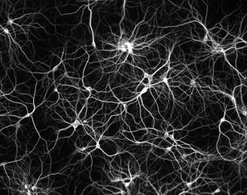 0. neuron-network-stepienybarno-colectivos-arquitectura-gestalt