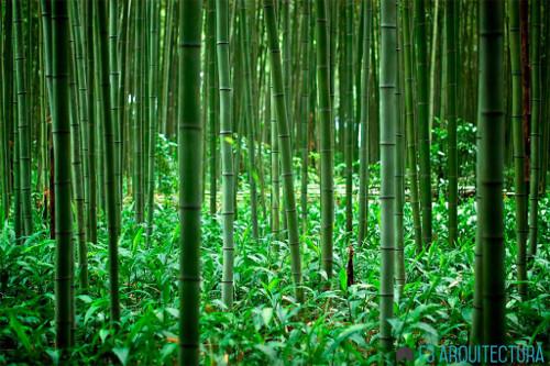 stepienybarno-blog-stepien-y-barno-f3-arquitectura-bambu