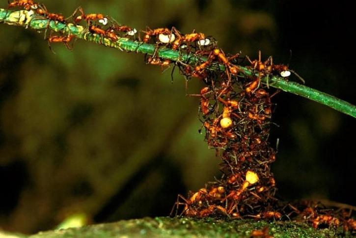 hormigas - arquitectos- stepienybarno