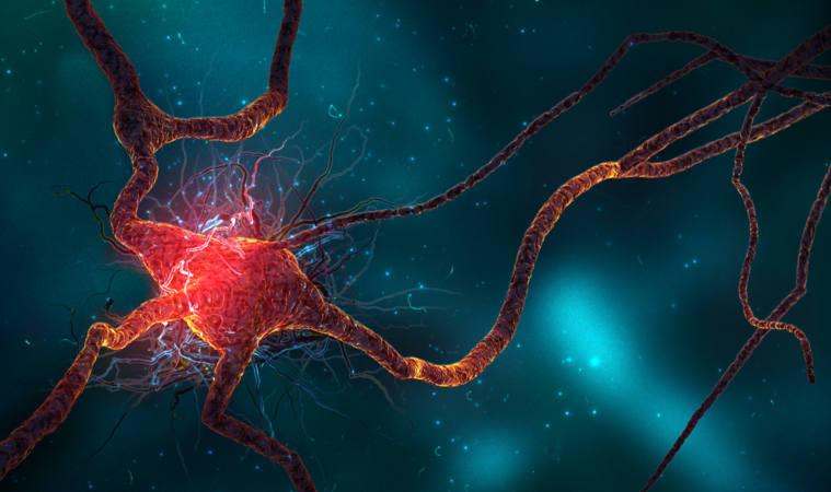 4.-neurogenesis-arquitectoproductivo-arquitecto-productivo-stepienybarno